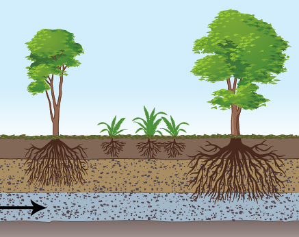 Quiz 2 2 assessing the impact of human activities on for Garden soil layers